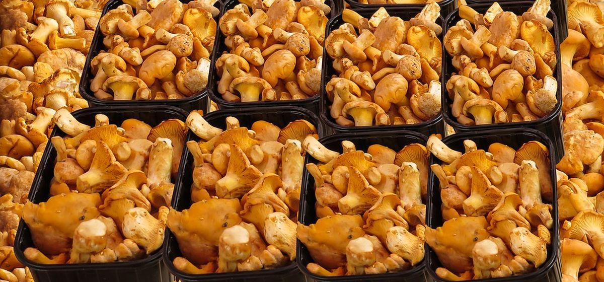 Что почем. Сколько стоят лисички, огурцы и молодой картофель на барановичских рынках
