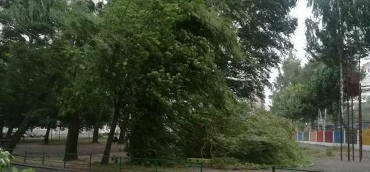 Дерево упало на детскую площадку в Барановичах. Фотофакт