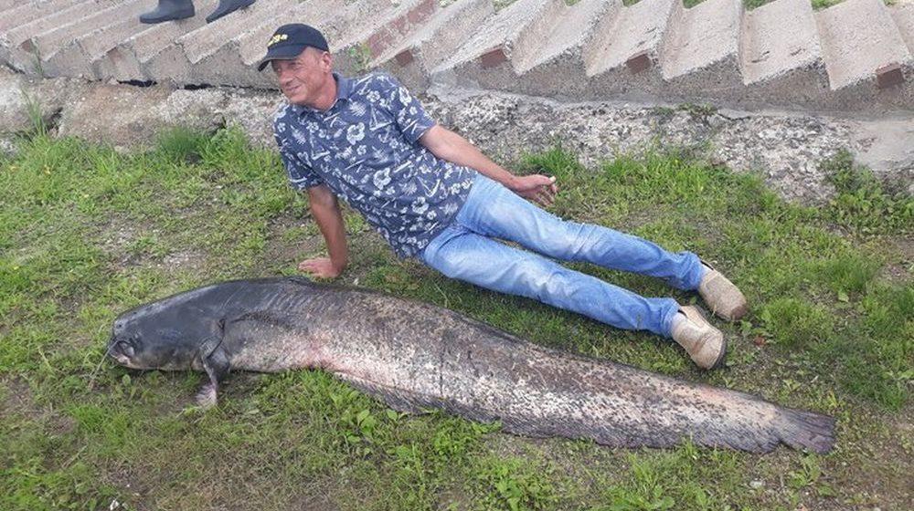 В Мозыре рыбаки поймали еще одну рыбу-монстра. Фотофакт