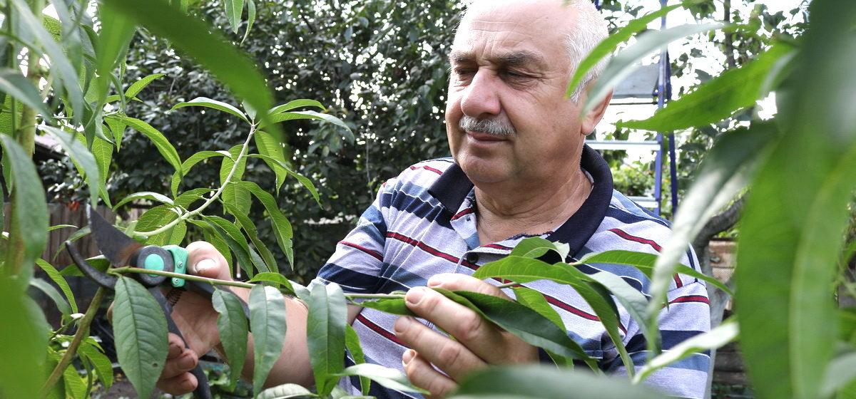 Почему обрезать деревья лучше осенью? Рассказывает барановичский агроном Петр Ломонос