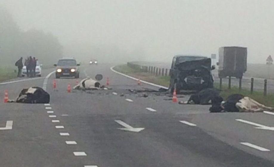 Под Белыничами микроавтобус врезался в стадо коров — мертвые животные разбросаны по дороге. Видео