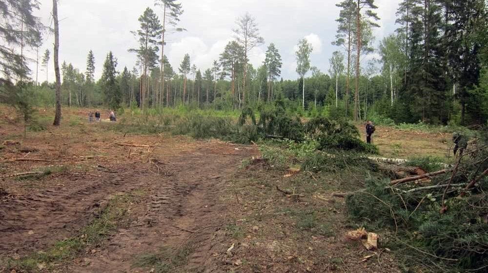 Дерево насмерть придавило мужчину в Глубокском районе