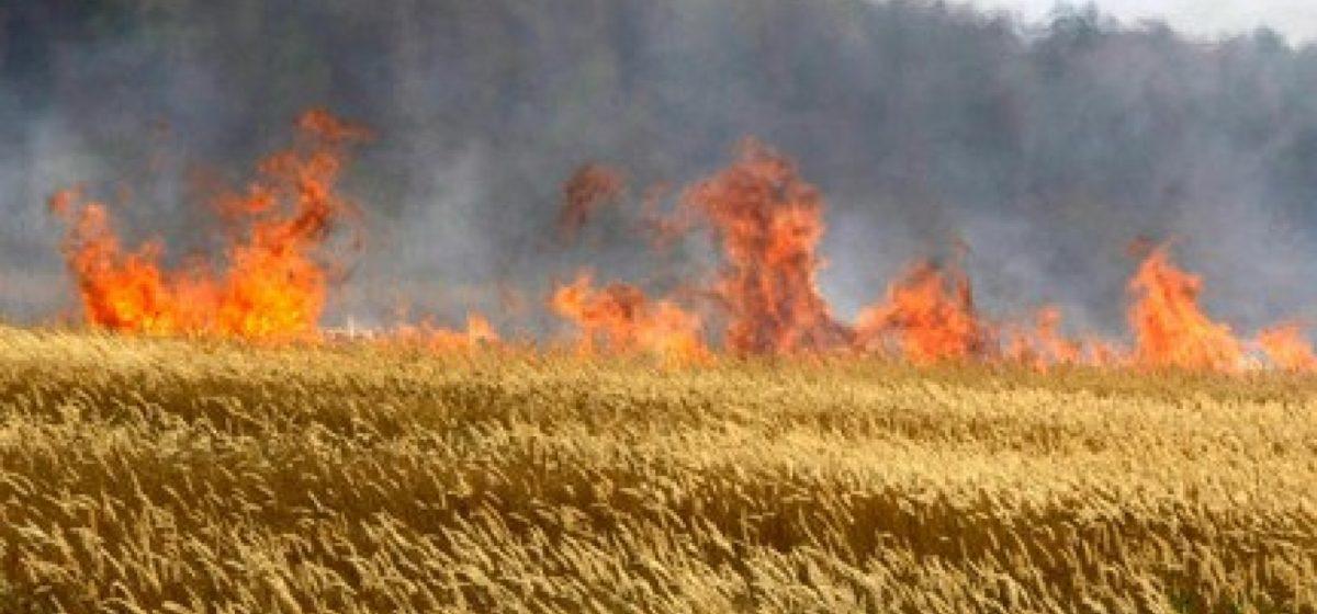Под Дзержинском дети пошли в поле покурить и подожгли пшеницу