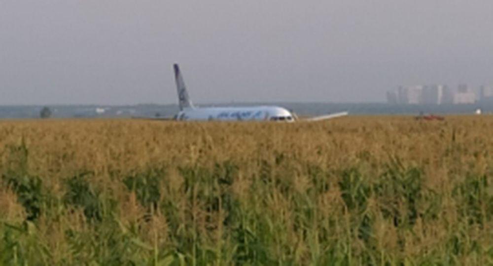 Из-за попадания птиц в двигатель совершил жесткую посадку в Подмосковье пассажирский самолет с 226 пассажирами
