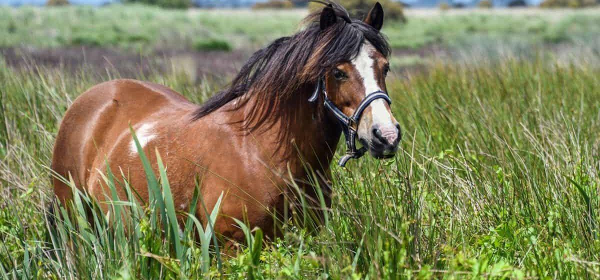 Лошадь заболела сибирской язвой в Столинском районе