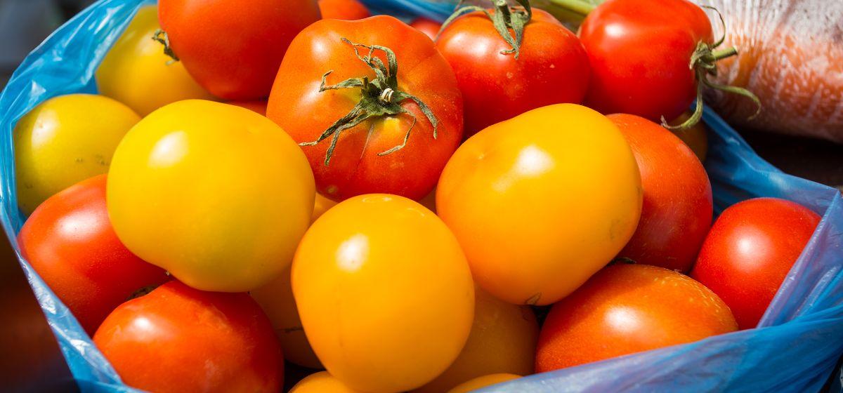 Фермеры грозятся выбросить помидоры на свалку. Их никто не покупает