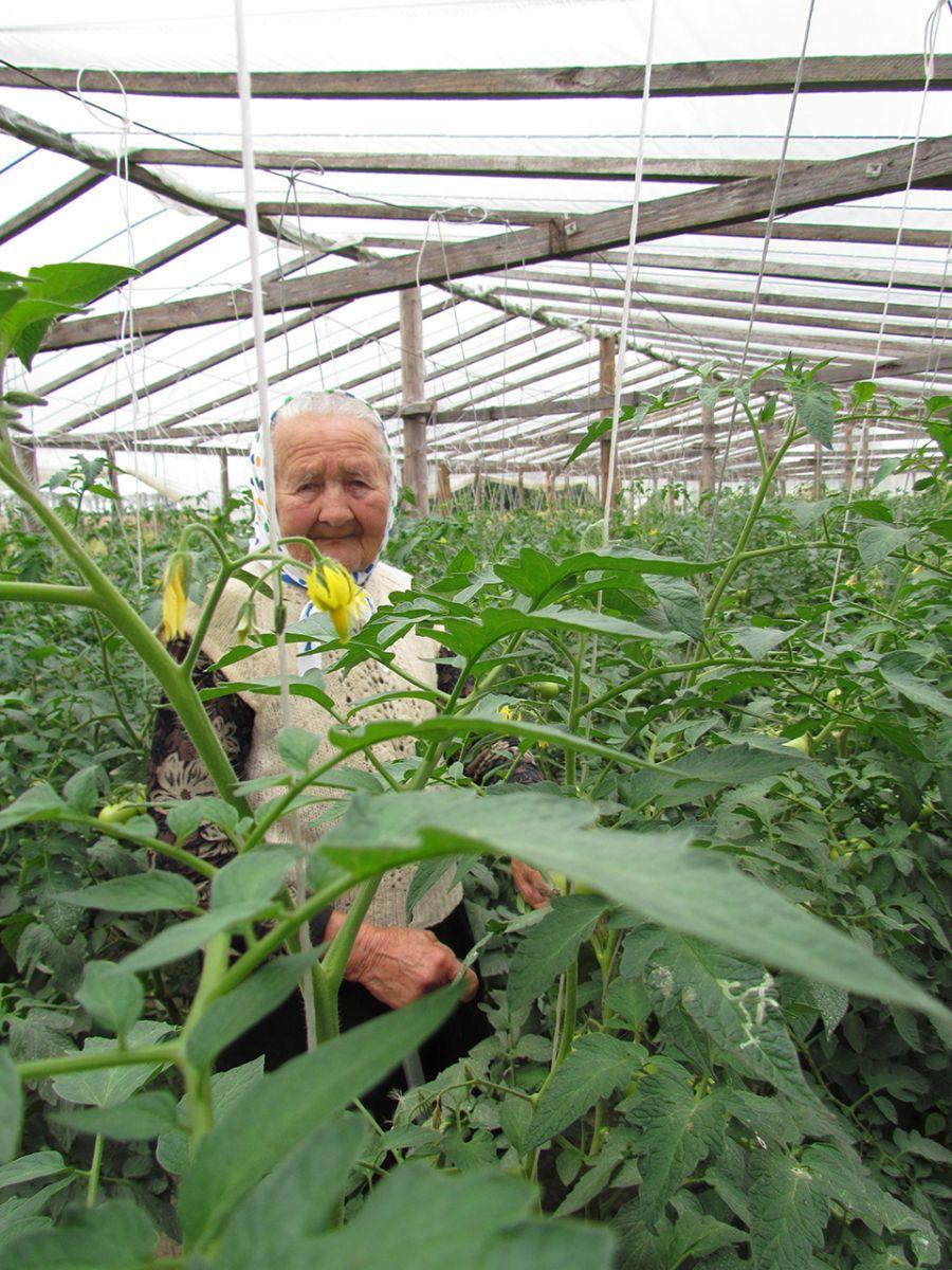 90-летняя Леонида Мирончик выращивает томаты много лет. Фото: https://1prof.by/