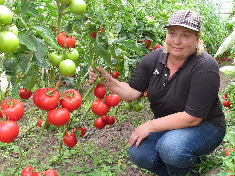 Для Елены Буйко выращивание томатов из увлечения превратилось в бизнес. Фото: https://1prof.by/