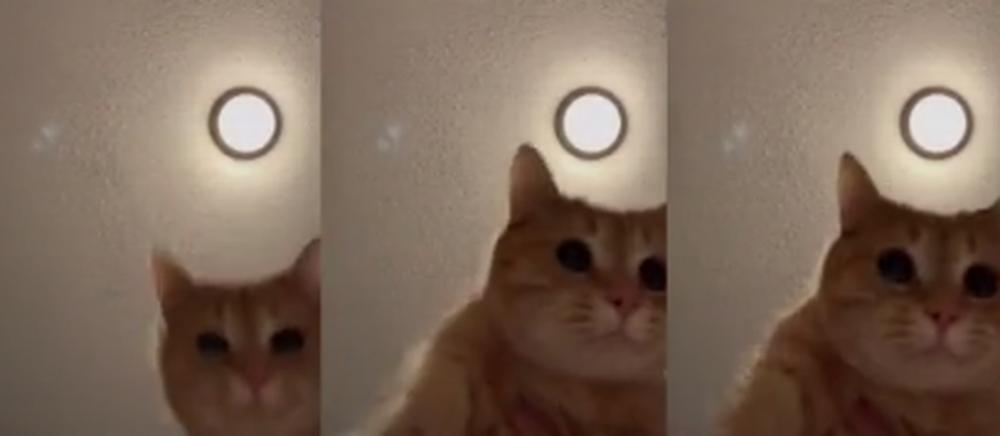 Жительница Канады сняла видео с танцующим котиком и стала знаменитой