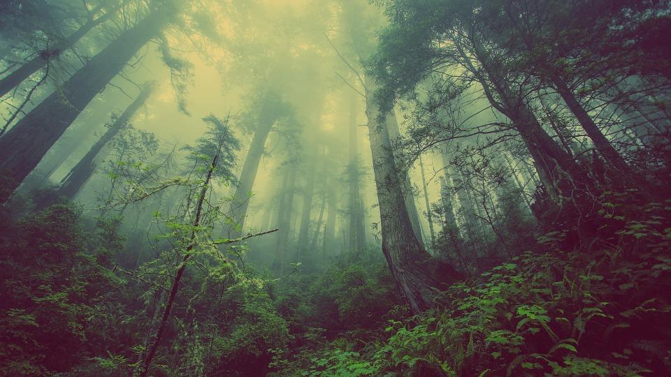 Тест. Выживете ли вы, заблудившись лесу?