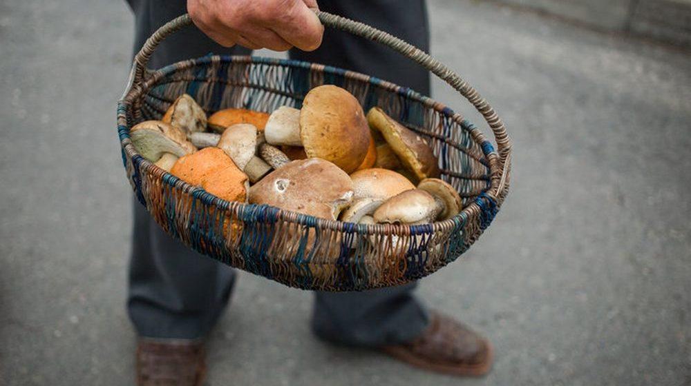 Потерявшийся грибник девять дней бродил по лесу в Витебском районе и даже дошел до России