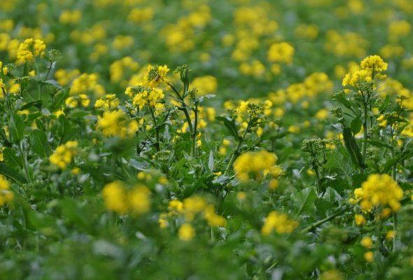 То, что необходимо для питания растений