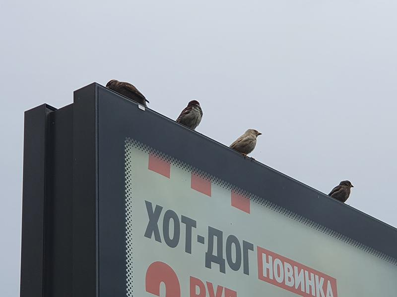 Фото: ptushki.org