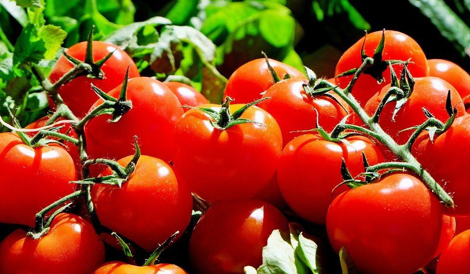 Заболевания, при которых нельзя есть помидоры