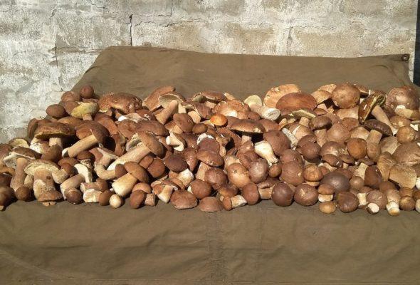 В заготовительных пунктах активно принимают грибы. Сколько на них можно заработать?