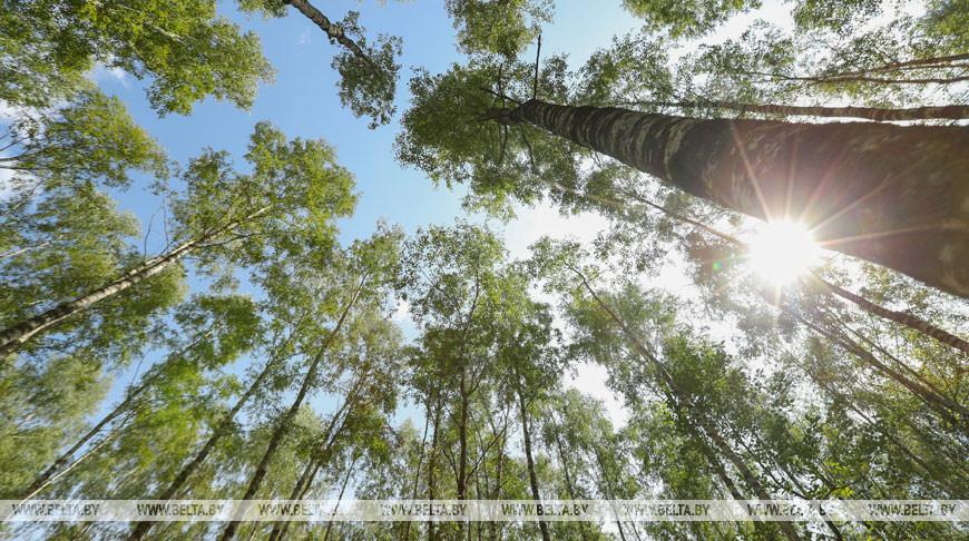 Четверо суток в Витебске ищут пенсионерку, которая пошла в лес за грибами и пропала