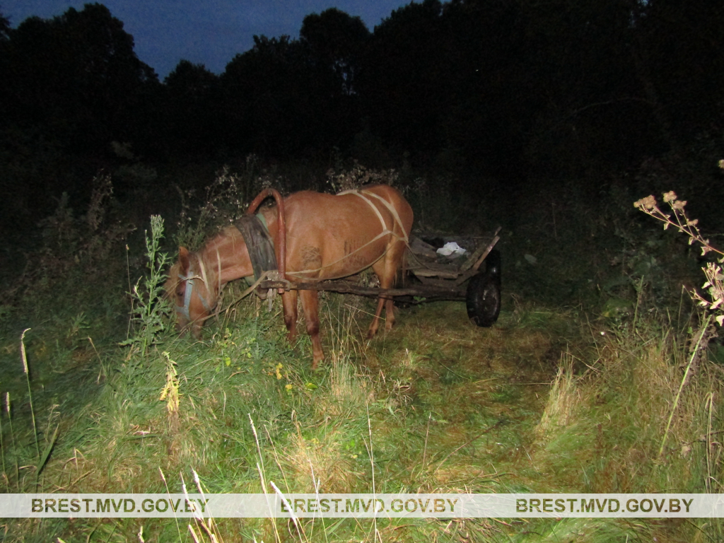 Фото: brest.mvd.gov.by