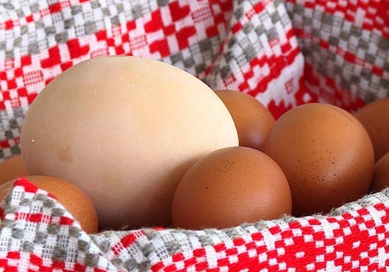 На Могилевщине курица снесла самое большое яйцо в Беларуси. Видео