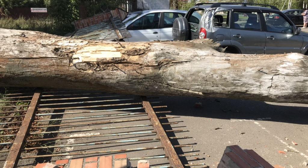 В Кобрине из-за рухнувшего дерева на пять машин упал забор