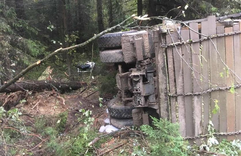 Спиленное дерево упало на проезжающий мимо грузовик под Борисовом, погиб водитель. Фото