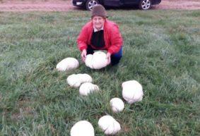 Грибы-гиганты нашли в Барановичском районе