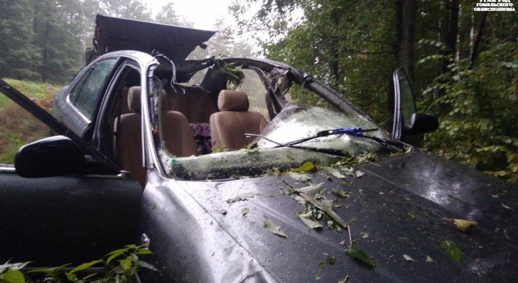Легковушка сбила лося и вылетела в кювет в Жлобинском районе