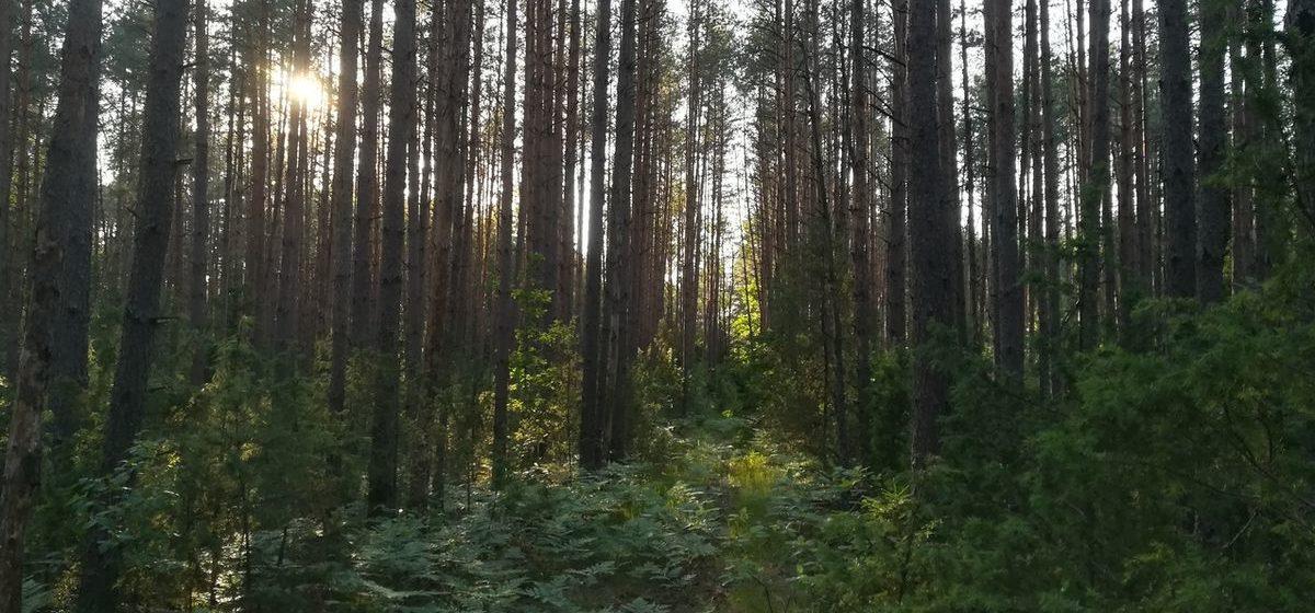 В Барановичском районе сняли запрет на посещение лесов