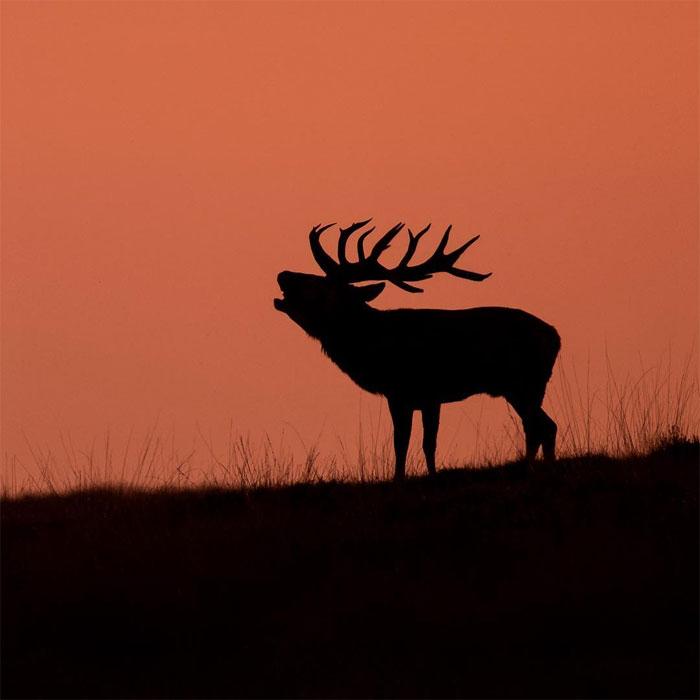 Фото: Dick van Duijn, boredpanda.com