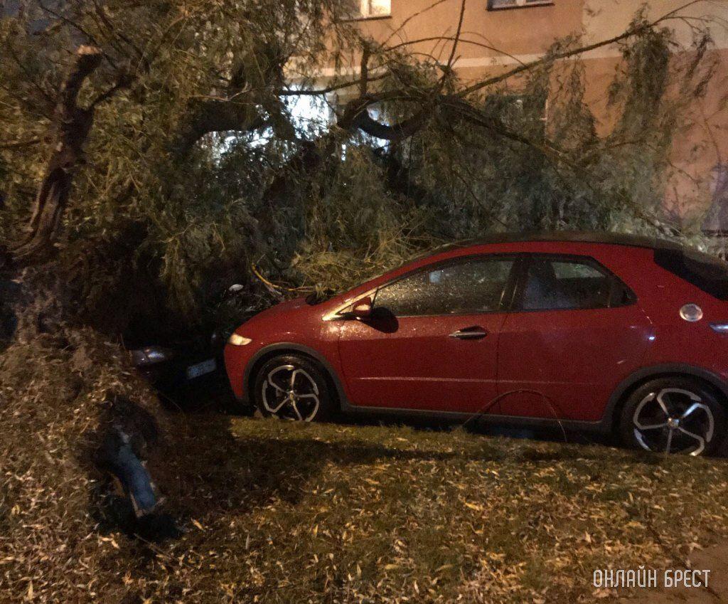 Дерево упало в Бресте на пр. Космонавтов. Фото: https://onlinebrest.by