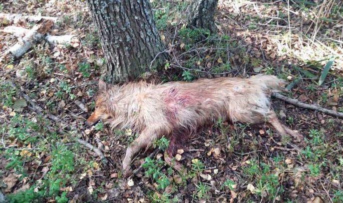 В Сенненском районе мужчина застрелил пса, побежавшего за квадроциклом. Очевидцы требуют наказания