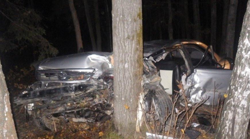 Под Могилевом водитель сбил лося и попал в больницу