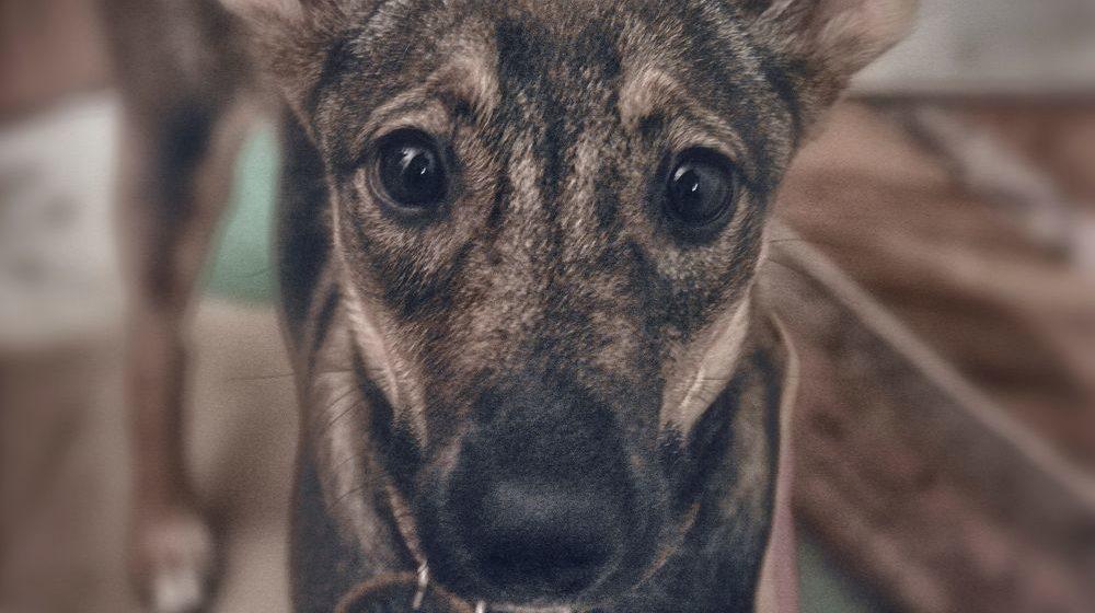 Брестчанин дома зарезал свою собаку. Возбуждено уголовное дело