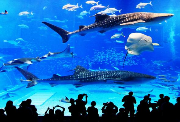 L'Aquarium Barcelona: морской аквариум в Барселоне