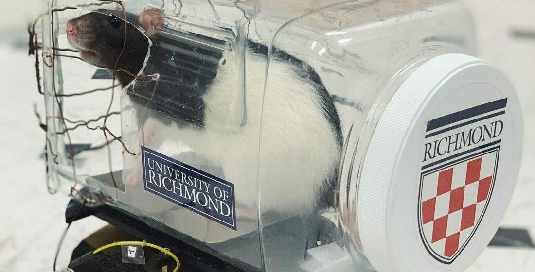Американские ученые научили крыс водить маленькие машинки. Посмотрите, как это круто!