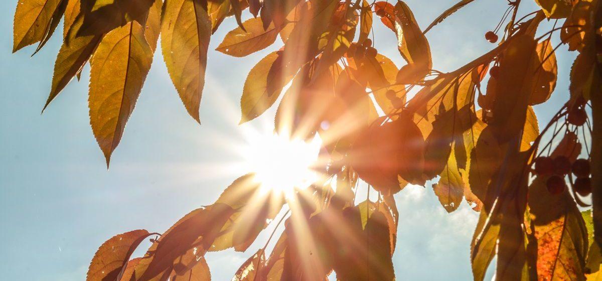 Сохранится ли теплая погода в ближайшие дни в Барановичах