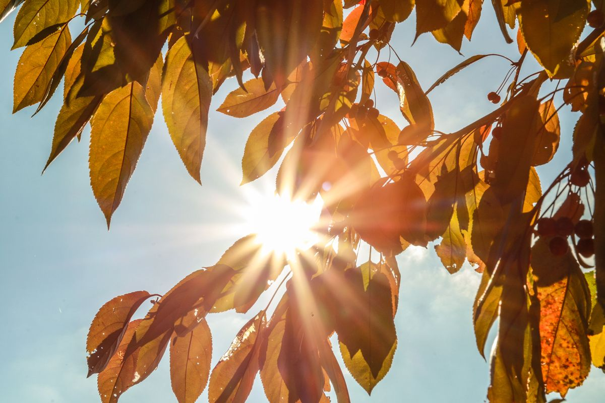 В Курской области днем прогнозируют тепло и солнце, а ночью - заморозки
