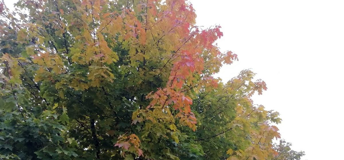 Погода в Барановичах 12 октября: тепло и без дождей
