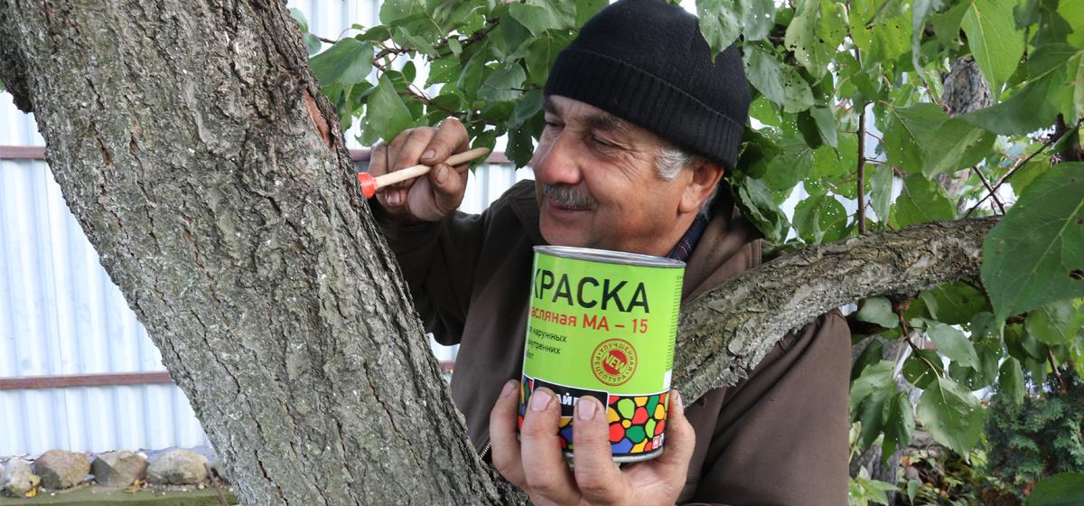 Рак плодовых деревьев: причины появления и что делать