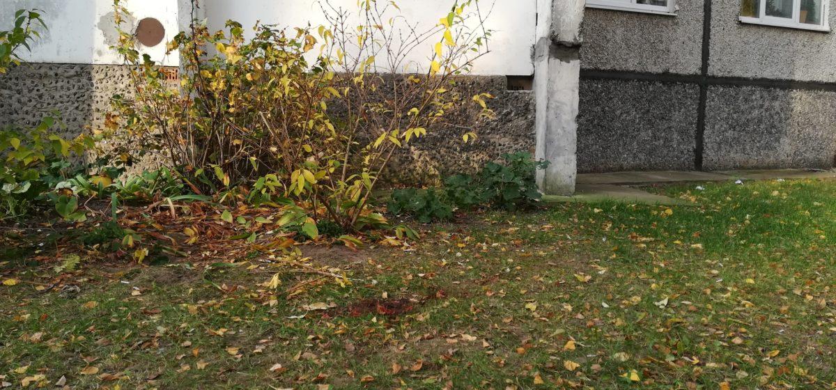 Новости. Главное за 18 октября: сгорел четырехлетний мальчик в стоге сена на Могилевщине, и выпал человек с седьмого этажа в Барановичах