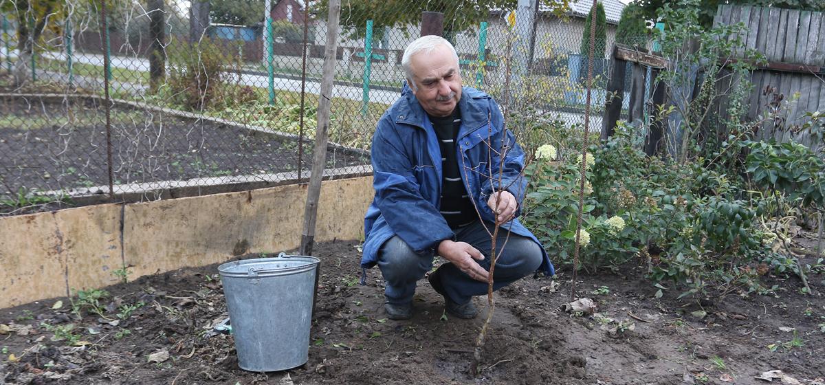 Как правильно выбрать плодовые деревья и посадить их. Видео