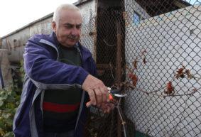 Виноград: как защитить от болезней и подготовить к зиме. Рассказывает известный агроном Петр Ломонос