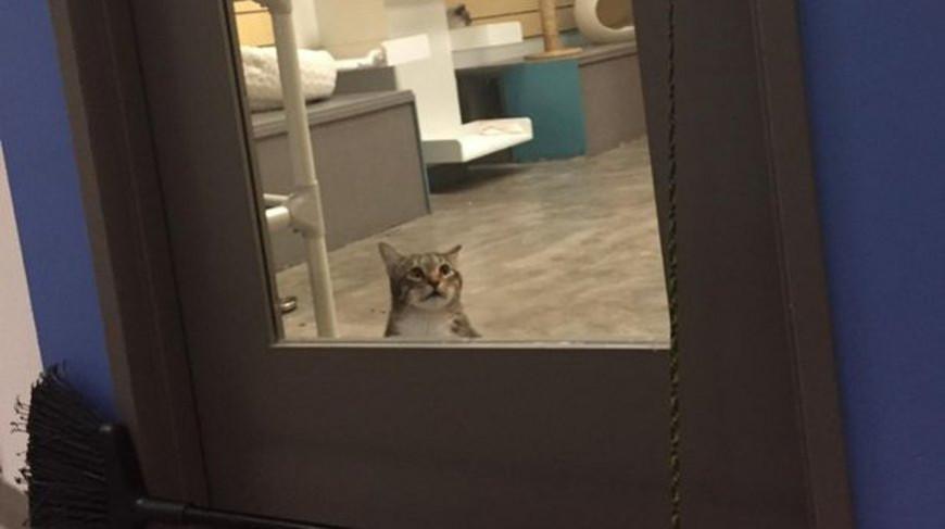 Свободолюбивый кот выпускал сородичей и убегал сам, но его посадили в «одиночку»