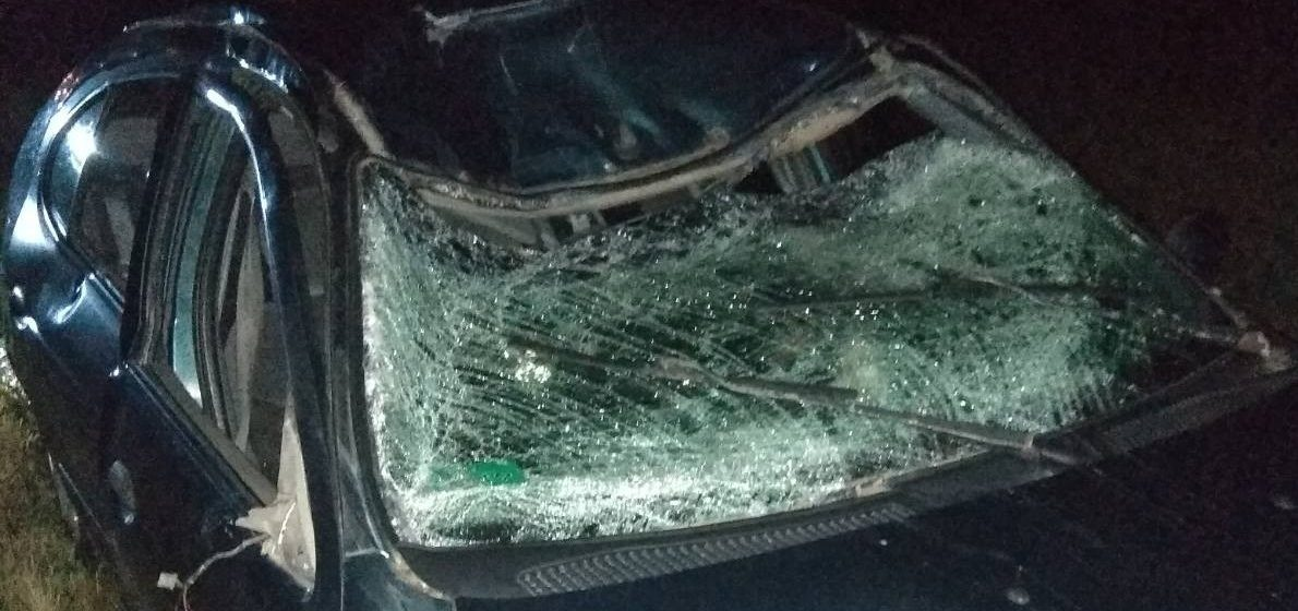 Лось стал причиной аварии в Витебской области