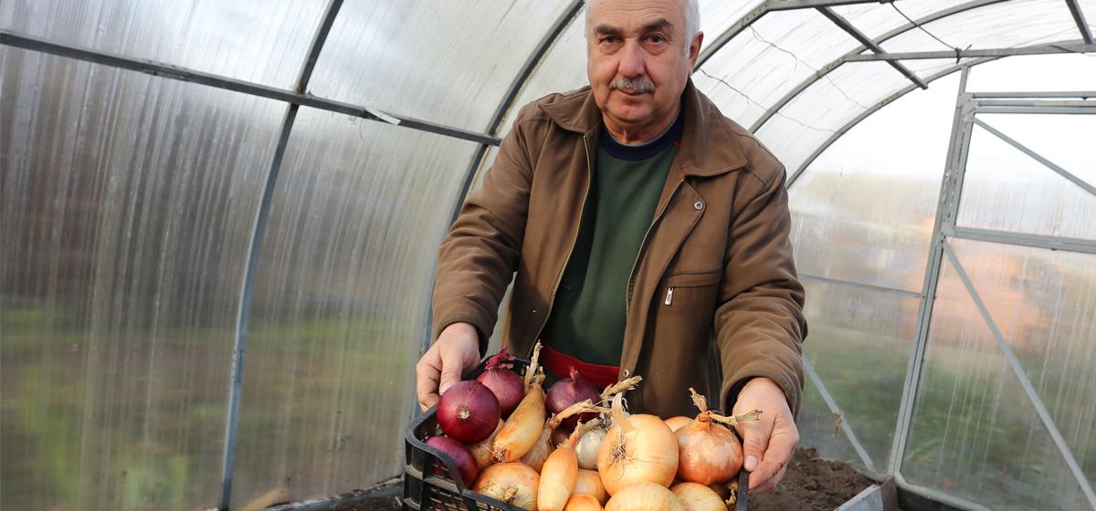 Лук: как вырастить луковицы весом с полкило. Видео