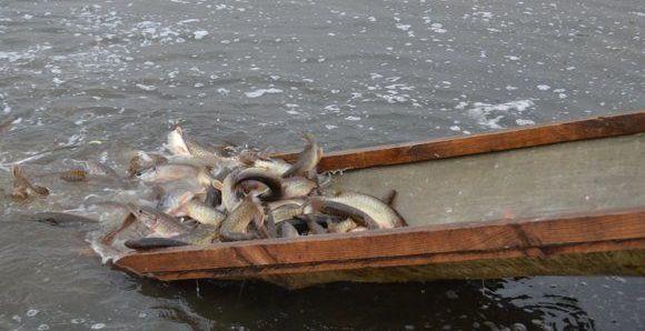 Зарыбление белорусских  водоемов. Фото: rgooboor.by