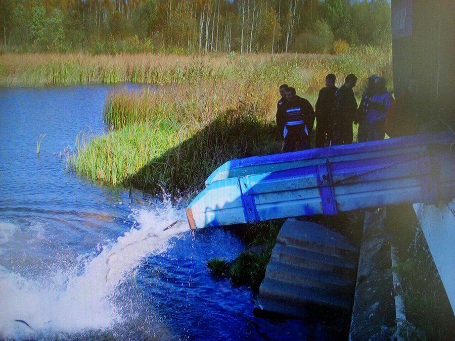 Зарыбление водоемов в Брестской области. Фото: rgooboor.by