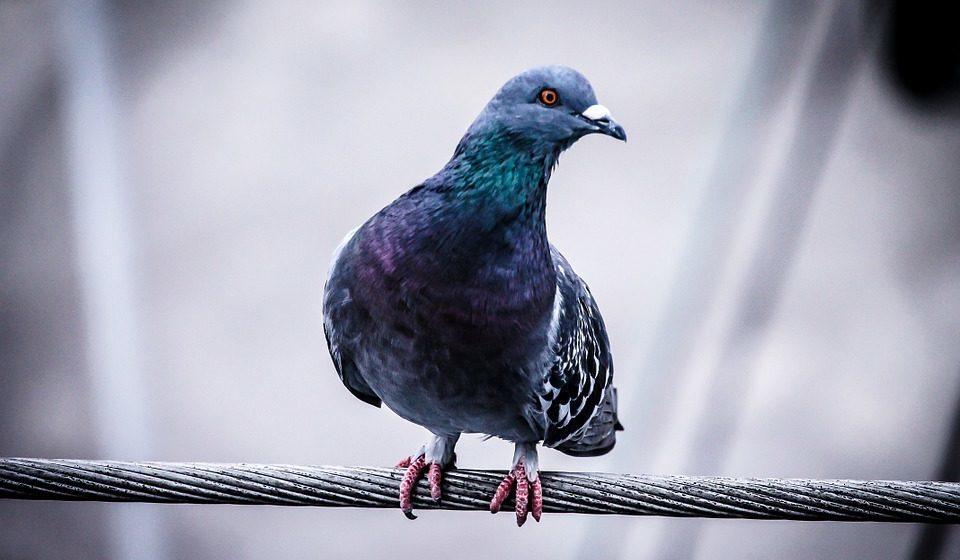 Убийце стаи голубей в Солигорске огласили обвинительный приговор