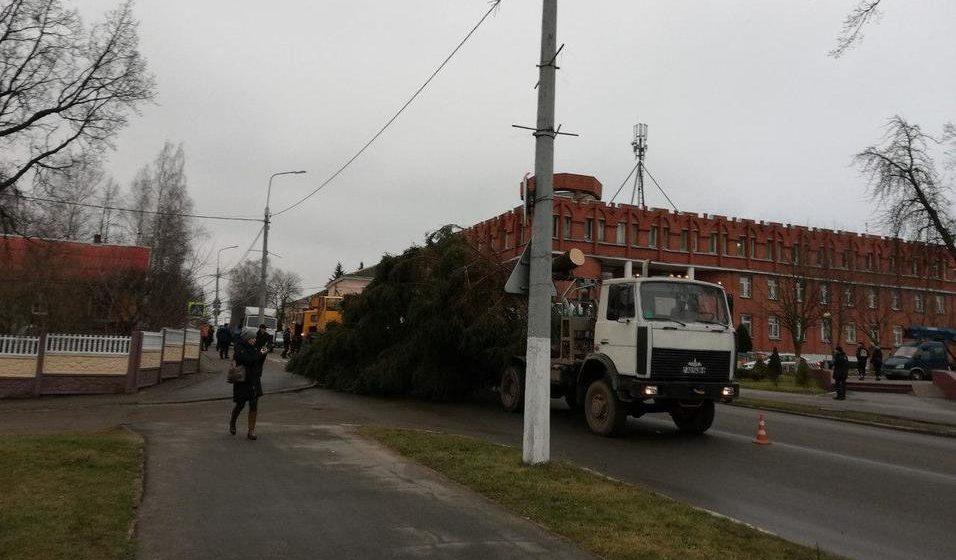 В Полоцке уронили новогоднюю елку. И это не первый год с ней проблемы. Видео