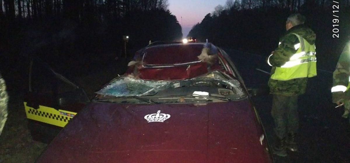 Такси сбило лося, который неожиданно выбежал на трассу в Калинковичском районе