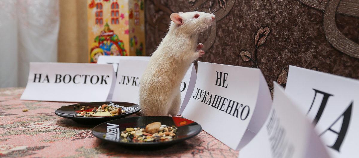 Кто станет президентом Беларуси и что будет с курсом рубля в 2020 году? Барановичская крыса Алиса дает свой прогноз